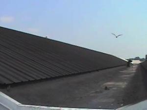 CWS 1000 N - pokrycie azbestu